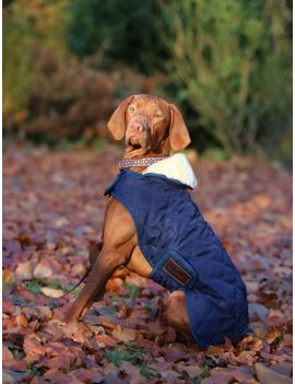 Kentucky Dogwear dog coat - 3