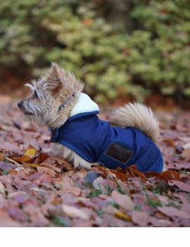 Kentucky Dogwear dog coat - 2