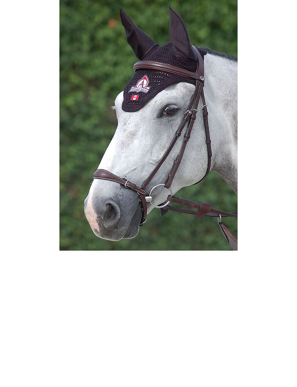 Dyon New English Collection drop noseband bridle - 1