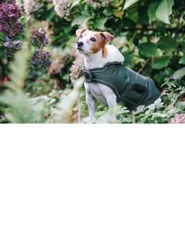Kentucky Horsewear Dog Coat Waterproof - 3