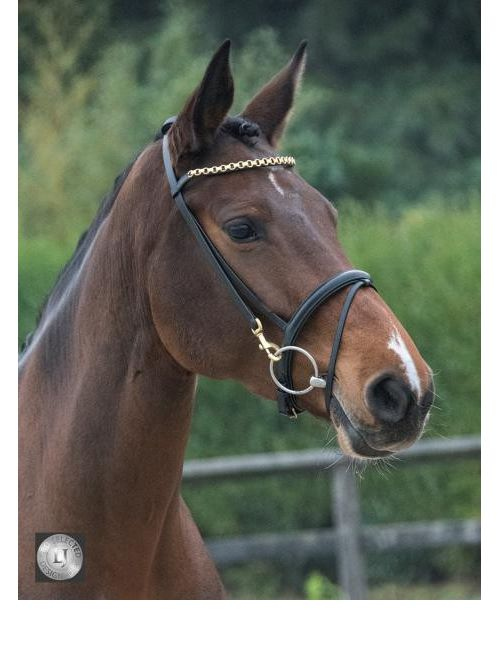 LJ Leathers Pro Selected bridle with clips - 2