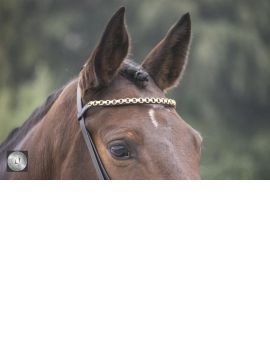 LJ Leathers Pro Selected bridle with clips - 3