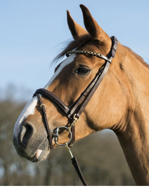 LJ Leathers Pro Selected bridle with clips - 1