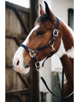 Kentucky Horsewear Plaited Nylon Halter - 4