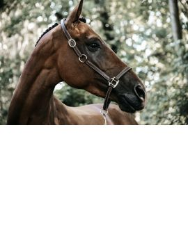 Kentucky Horsewear Leather Halter Flexible - 4