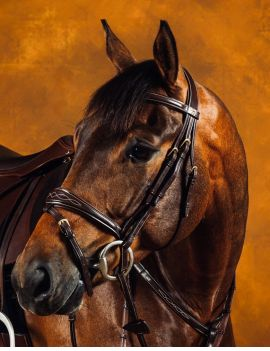 Dyon Collection anatomic flash noseband bridle - 1